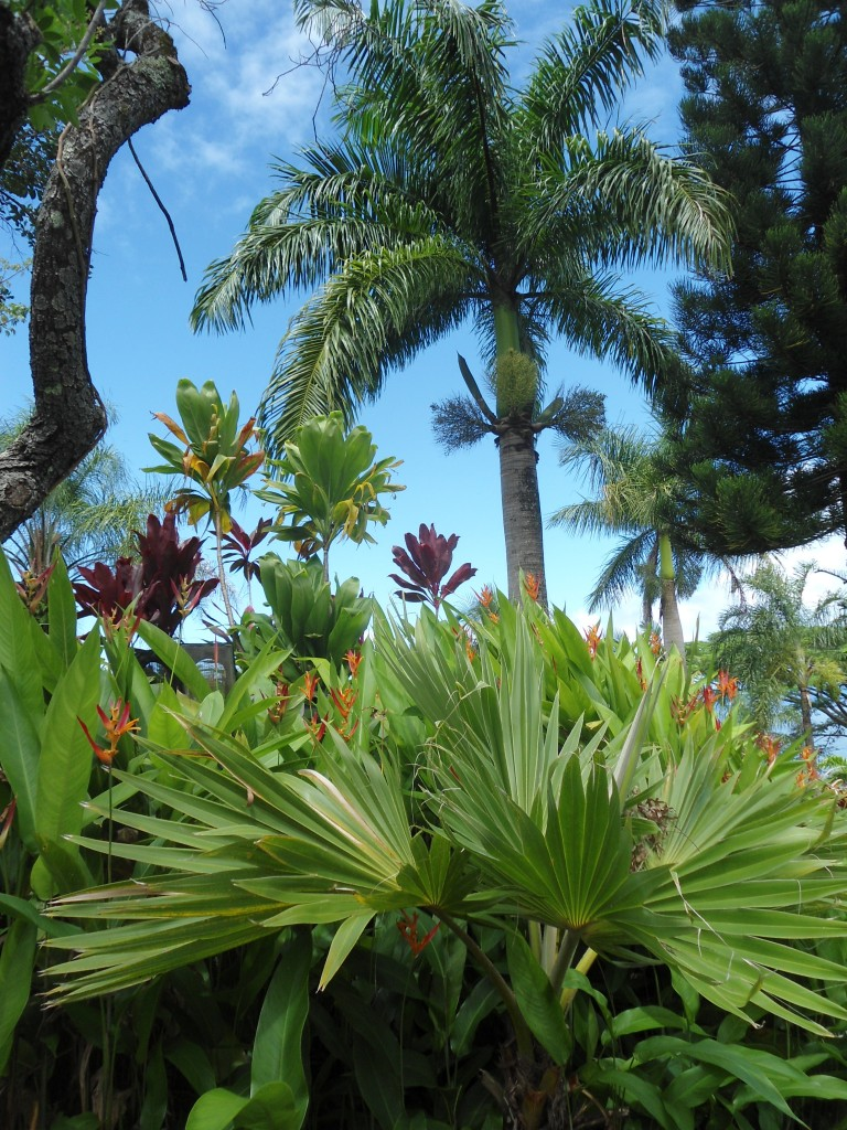 Rd to Hana trop garden 11