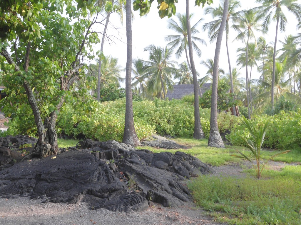 A tree growing right through the lava (on left)