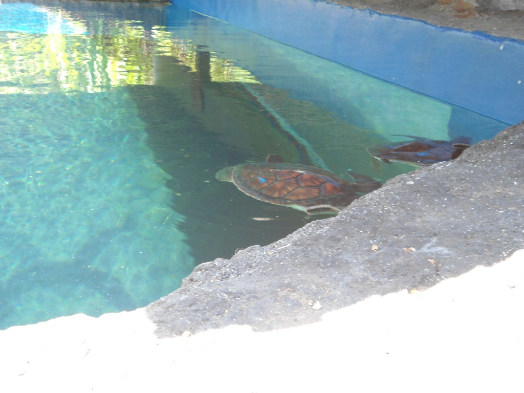 The turtles hiding in the shade