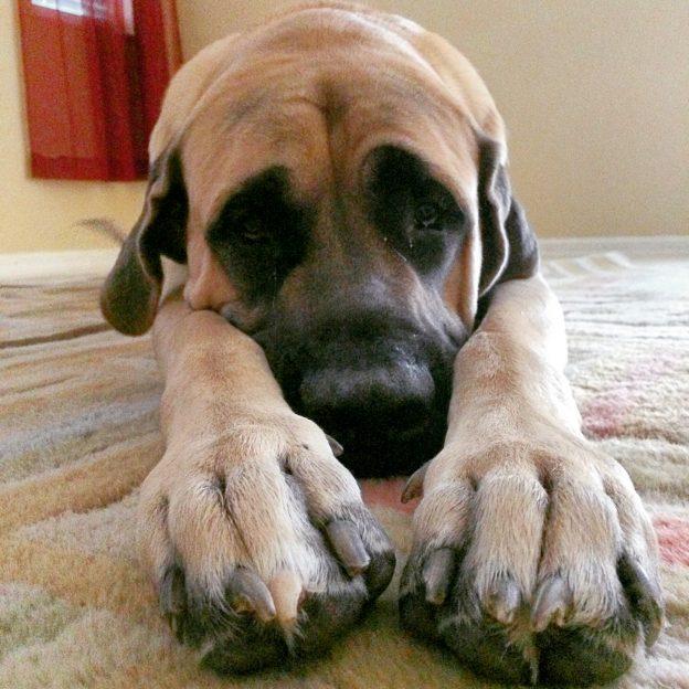 blog_post_pets4-624x624